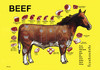Cartoon: beef (small) by kotrha tagged horse,beef,pork,veal,chicken