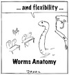 Cartoon: Worms Anatomy (small) by joxol tagged worms,anatomy,class,school,education,animal,pisa