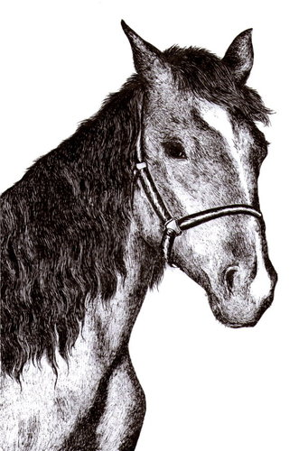 Cartoon: Horse (medium) by Barcarole tagged horse