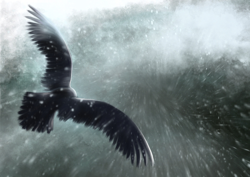 Cartoon: Winter is coming (medium) by alesza tagged winter,snow,flying,eagle,stormy,cold