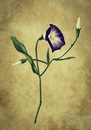 Cartoon: Flower (small) by alesza tagged flower winde nature blume