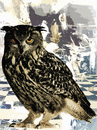 Cartoon: A Day for Night Bird (small) by Zoran Spasojevic tagged day,for,night,bird,birds,owl,serbia,kragujevac,emailart,paske,spasojevic,zoran,graffit,digital,collage
