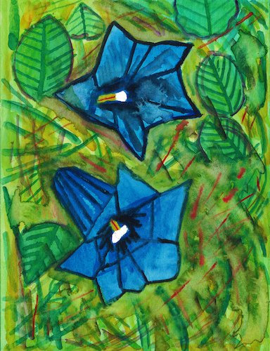 Cartoon: Alpine gentians (medium) by Pascal Kirchmair tagged blaue,enziane,abstract,painting,peinture,abstraite,abstraktes,gemälde,trumpet,alpine,gentian,genciana,genziana,expressionism,expressionismus,alpen,enzian,dibuix,illustration,drawing,zeichnung,pascal,kirchmair,ilustracion,dibujo,desenho,disegno,ilustracao,illustrazione,illustratie,dessin,du,jour,art,of,the,day,tekening,teckning,watercolor,watercolour,aquarell,aquarelle,acquerello,acquarella,acuarela,aguarela,aquarela,alps,alpes,alpi,blaue,enziane,abstract,painting,peinture,abstraite,abstraktes,gemälde,trumpet,alpine,gentian,genciana,genziana,expressionism,expressionismus,alpen,enzian,dibuix,illustration,drawing,zeichnung,pascal,kirchmair,ilustracion,dibujo,desenho,disegno,ilustracao,illustrazione,illustratie,dessin,du,jour,art,of,the,day,tekening,teckning,watercolor,watercolour,aquarell,aquarelle,acquerello,acquarella,acuarela,aguarela,aquarela,alps,alpes,alpi