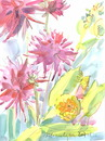 Cartoon: Flowers. Dahlias (small) by Kestutis tagged flowers,dahlias,sketch,blumen,watercolor,kestutis,siaulytis,lithuania,summer,nature