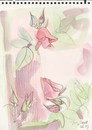 Cartoon: Roses (small) by Kestutis tagged roses,sketch,nature,kestutis,siaulytis,lithuania