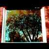 Cartoon: MH - The Tree (small) by MoArt Rotterdam tagged rotterdam,boom,tree,window,reflection,weerspiegeling