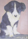 Cartoon: Rory (small) by jjjerk tagged dog,rory,cartoon,ireland,caricature,black,white,animal