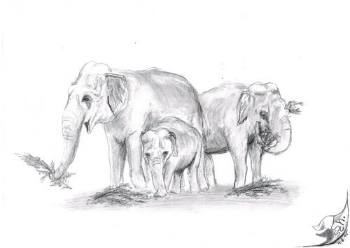 Cartoon: Elephas maximus indicus (medium) by swenson tagged animal,tier,elefant,elephant,asien,asiatisch,asia