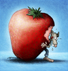 Cartoon: BODO Magazin - Erdbeerbodo (small) by volkertoons tagged volkertoons,cartoon,illustration,bodo,ratte,rat,erdbeere,strawberry,obst,frucht,fruit