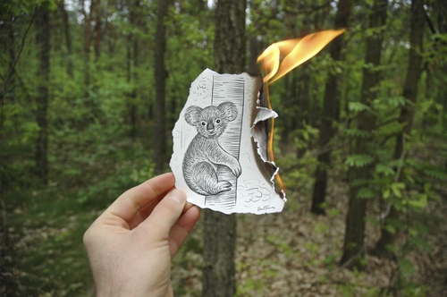 Cartoon: Pencil Vs Camera - 15 (medium) by BenHeine tagged pencil,vs,camera,traditional,digital,drawing,photography,koala,extinction,ben,heine,australia,poland,otwock,fire,flames,forest,trees,arbres,tronc,attacks,bushfires,road,accidents,fur,fourrure,destruction,habitat,preservation,imagination,cr