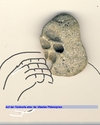 Cartoon: Face (small) by manfredw tagged gesicht,face,gorilla,denker,philosph,stein,sand,meer,urlaub